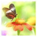 Butterfly bristle brushed digital painting thumb.