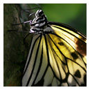 smiling butterfly photograph thumbnail.